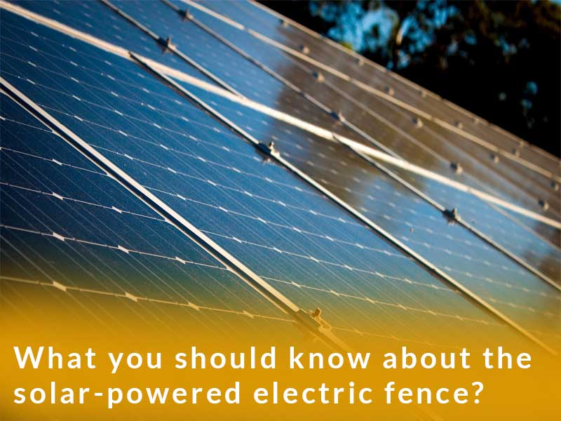 What you should know about the solar-powered electric fence